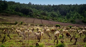 moutons-clos-anhel